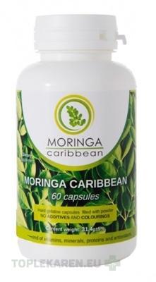 MORINGA CARIBBEAN STANDART 60CPS